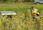 Harvesting Wildflowers
