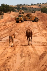 Working around local livestock is a daily occurrence as ADOT builds an interim detour in northern Arizona. Horses and cattle are drawn to water used in the construction of US 89T (also known as Navajo Route 20). The highway project includes installing 58 miles of barbed wire fence.