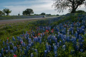 Seemingly endless vistas of bluebonnets and Indian paintbrushes enhance a springtime drive along Texas 71, a state highway in the Hill Country of Central Texas.  Near Spicewood, the right-of-way and surrounding fields offer abundant photo opportunities or just a color-filled journey for the lucky traveler.