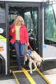 Ms. Ehrhart and Freddie were taking part in a quarterly guide dog training exercise that PSTA conducts with Southeastern Guide Dogs(SEGD). The exercises help train dogs for people with visual impairments, such as wounded veterans who get dogs - free of charge - through the SEGD Paws for Patriots™ program.